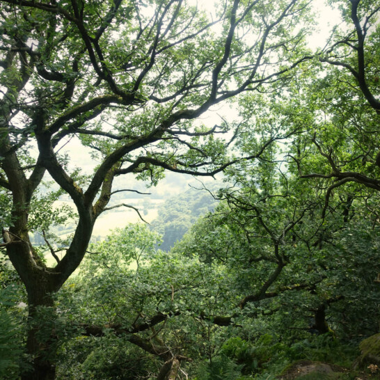 Ellie-and-Liv_Plant-a-Tree-National-Trust